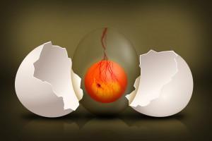 embryo-544192_1280